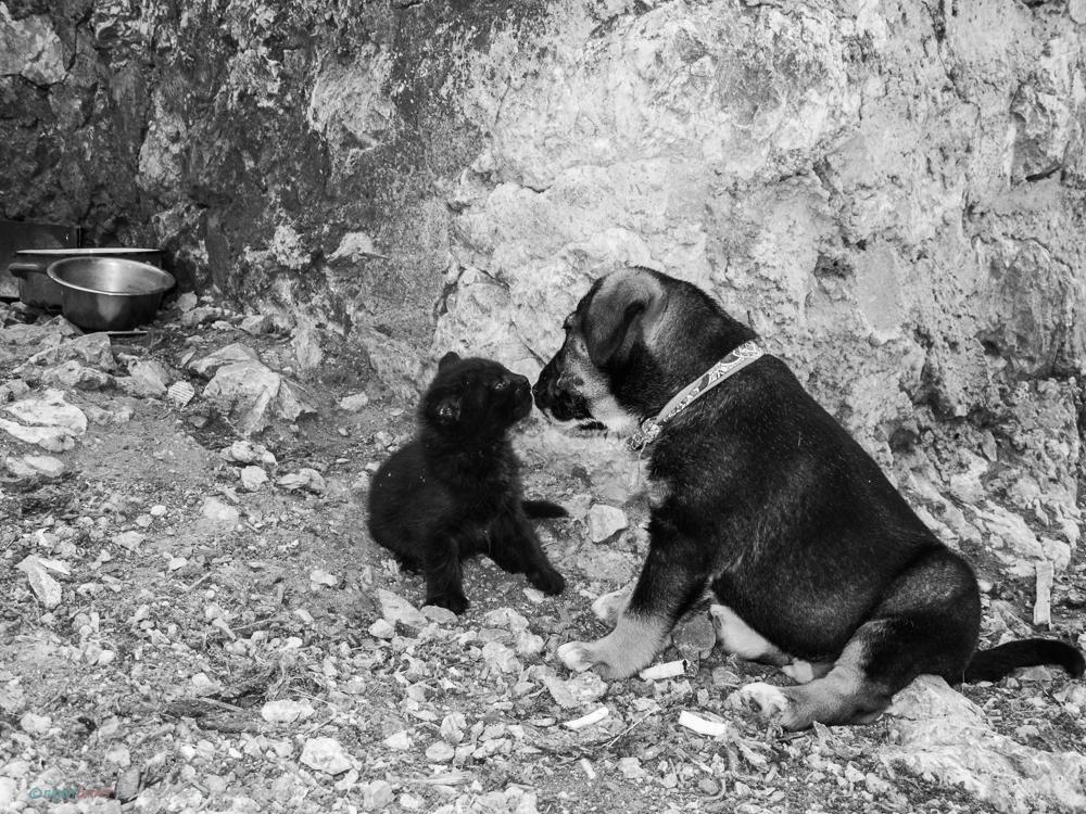 Dubrovnik_Dogs-10