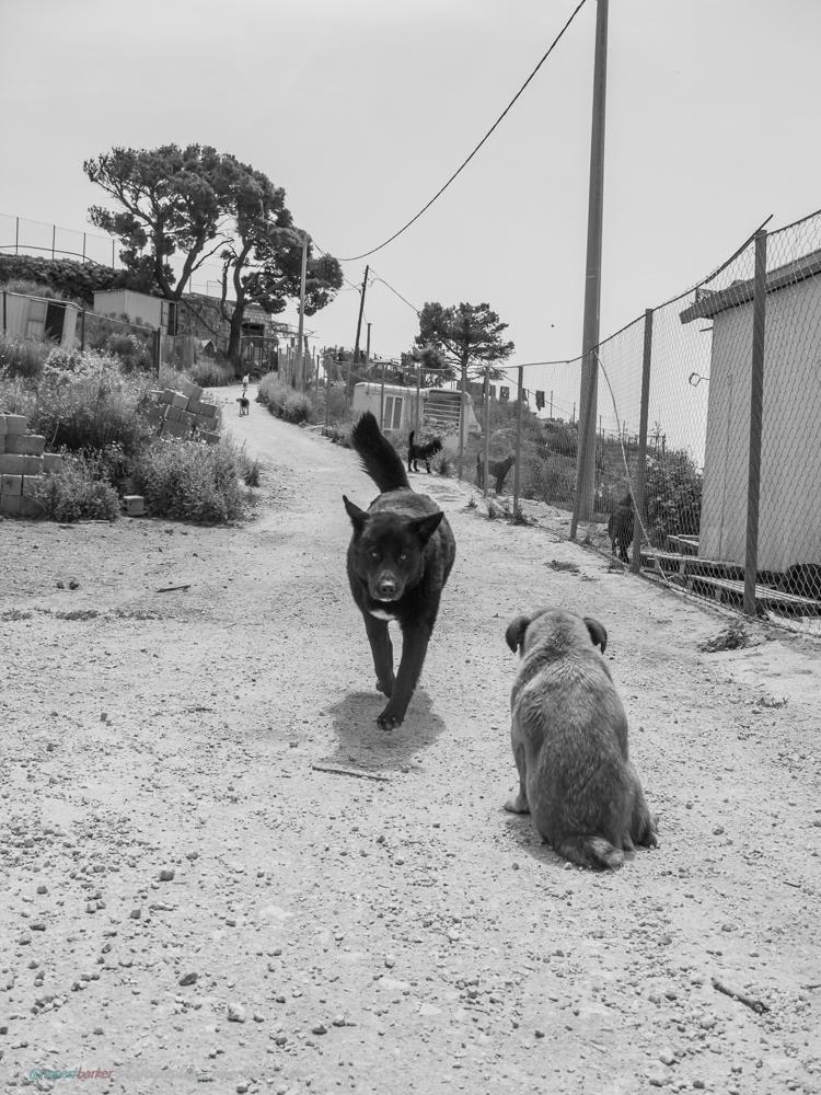 Dubrovnik_Dogs-1