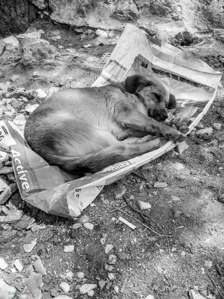 Dubrovnik_Dogs-4