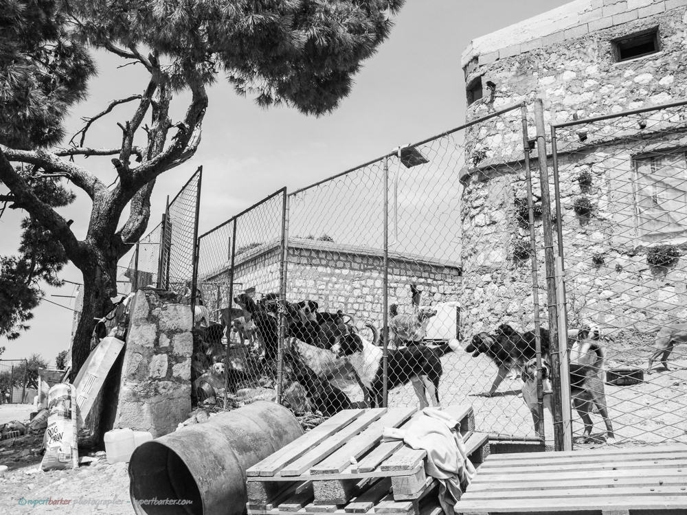 Dubrovnik_Dogs-5