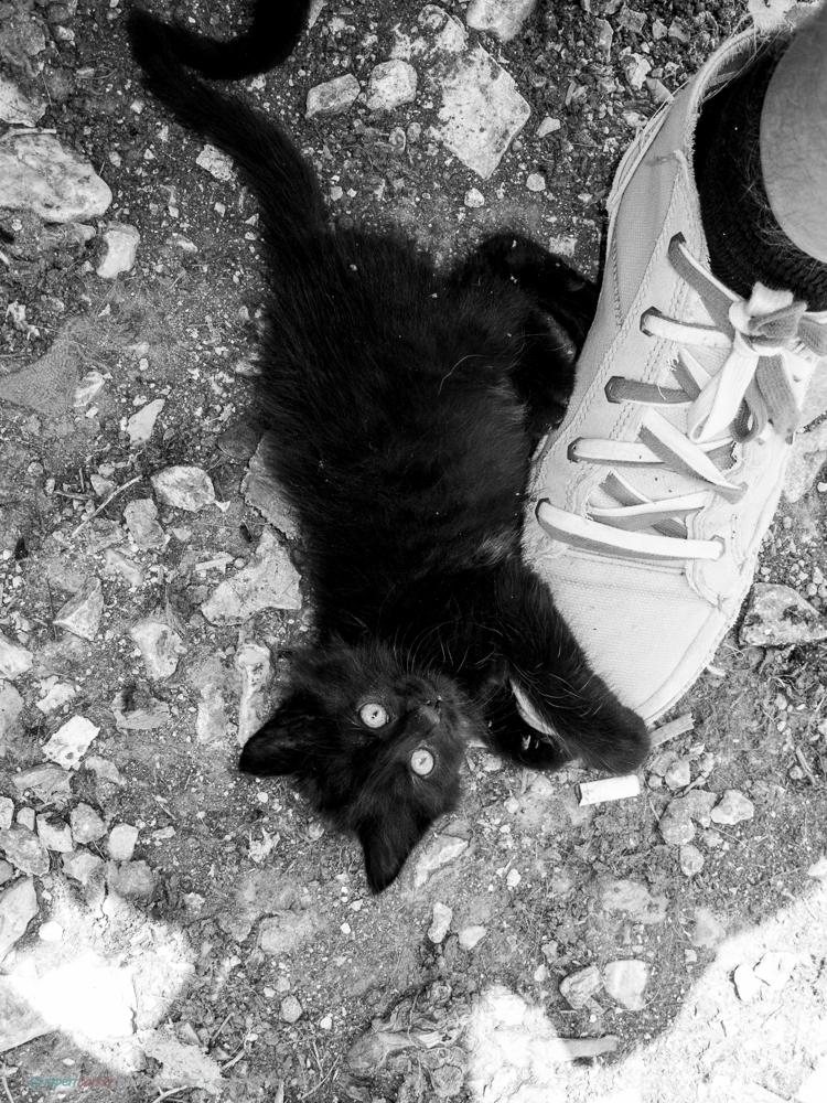 Dubrovnik_Dogs-7