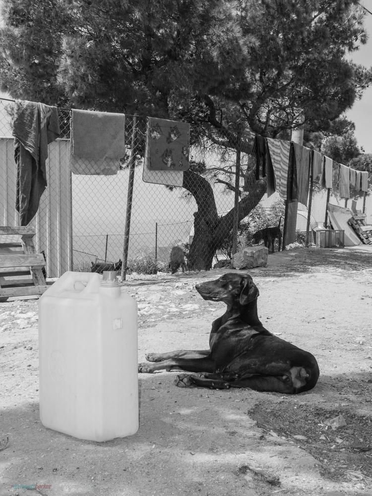 Dubrovnik_Dogs-8