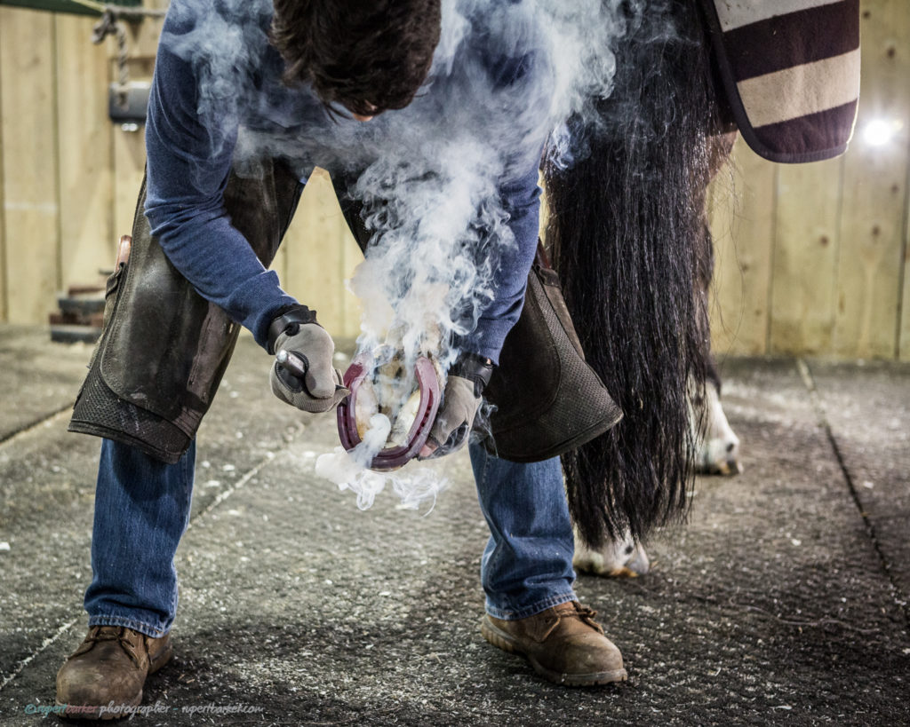 corrective farrier shoeing horses portrait wiltshire
